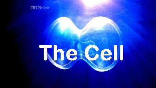 BBC: Клетка, или из чего состоит жизнь | Смотреть онлайн / Скачать (документальные фильмы)(BBC)(медицина)