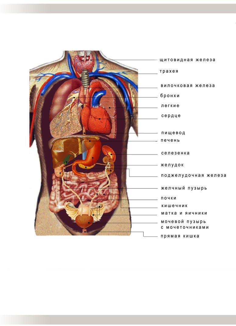 Уроки анатомии собственного тела в hd 20 фотография